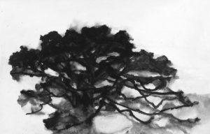 A. Hollan, Chêne, gouache sur papier marouflé sur toile, 2007