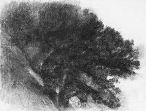 """A. Hollan, Le buisson tournant, fusain, 2014 A propos de l'oeuvre de ce peintre ami, J.Y. Pouilloux écrit """"Car il n'y a pas un arbre, aussi singulier soit-il, mais des moments distincts qui font un réseau particulier qui tissent des configurations irremplaçables et discontinues pour un même arbre vu du même endroit à la même heure pendant des jours successifs."""""""