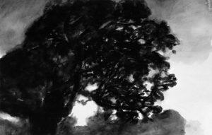 A. Hollan, Le foudroyé, grand chêne vert, 2007