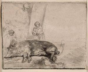 Rembrandt, Le cochon, eau-forte et pointe sèche, 1643 - Au lieu de l'habituelle scène d'équarrissage de la bête, l'artiste a choisi de faire une étude anatomique d'une truie couchée, seule figure de l'estampe minutieusement réalisée.